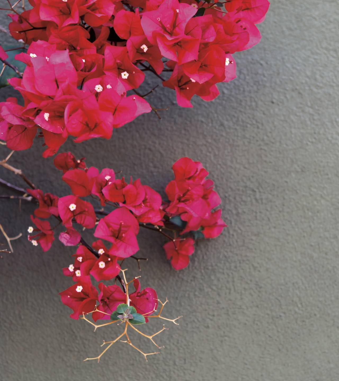 Coalesse Interactive Photograph of fuschsia flowers