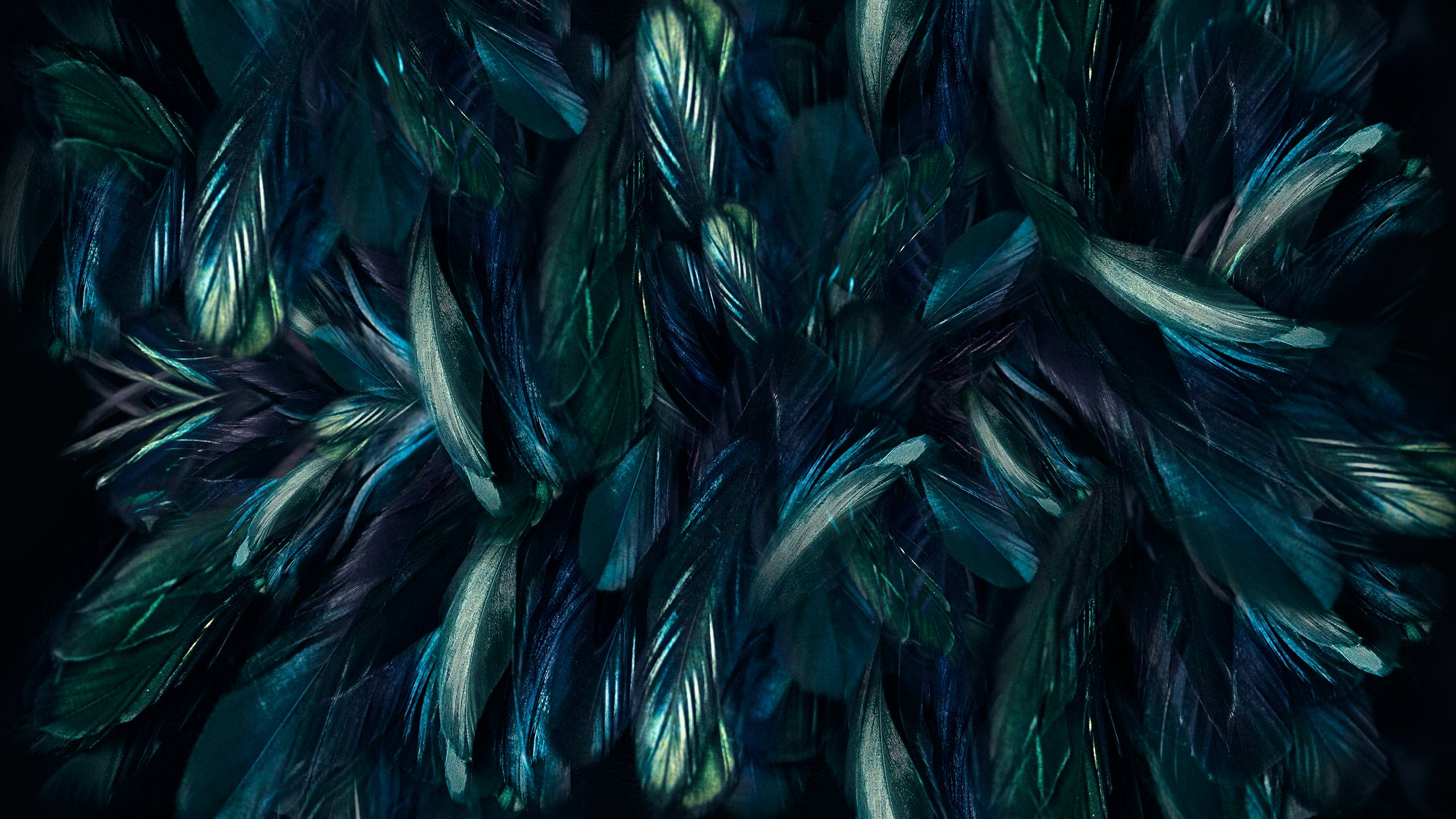 Adobe Lightroom Textures of Feathers