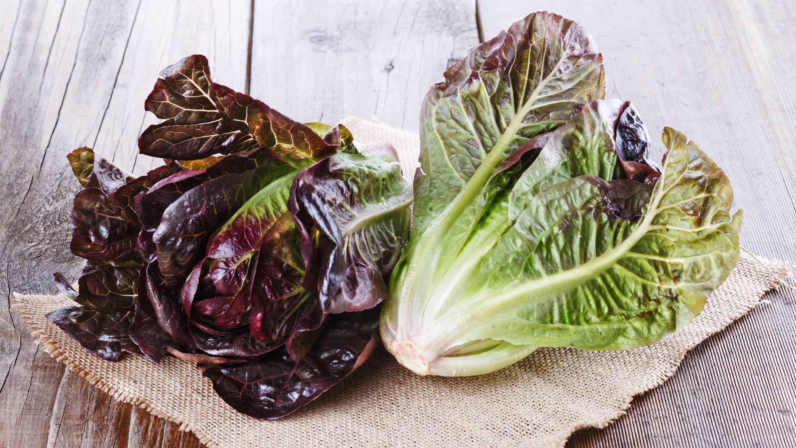 See-Jane-Farm-photograph-lettuce