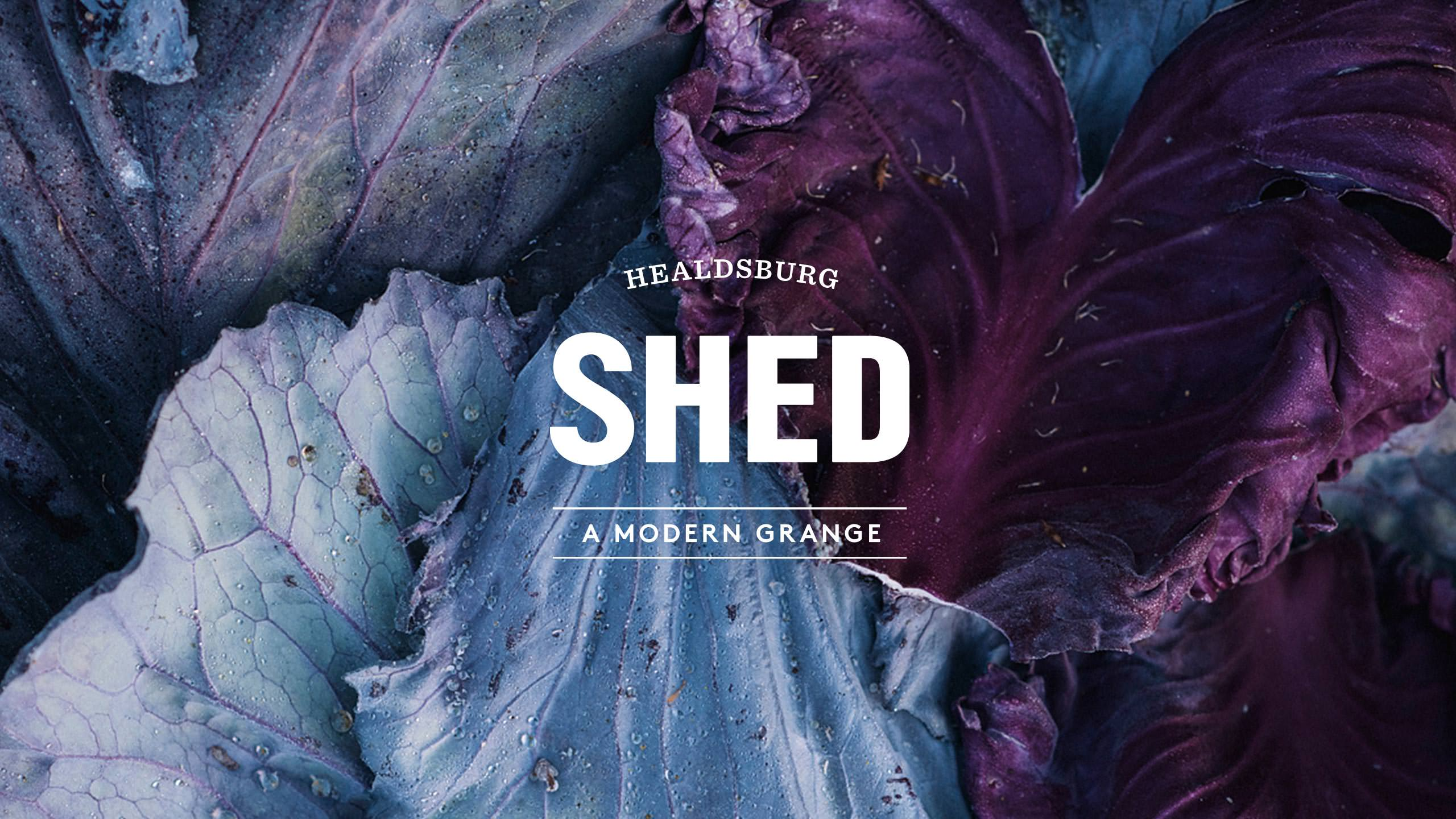 SHED Brand Identity with Purple Cabbage image in background