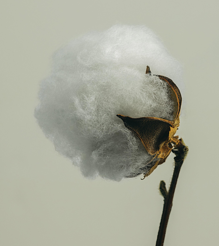 gmund-photography-cotton-13