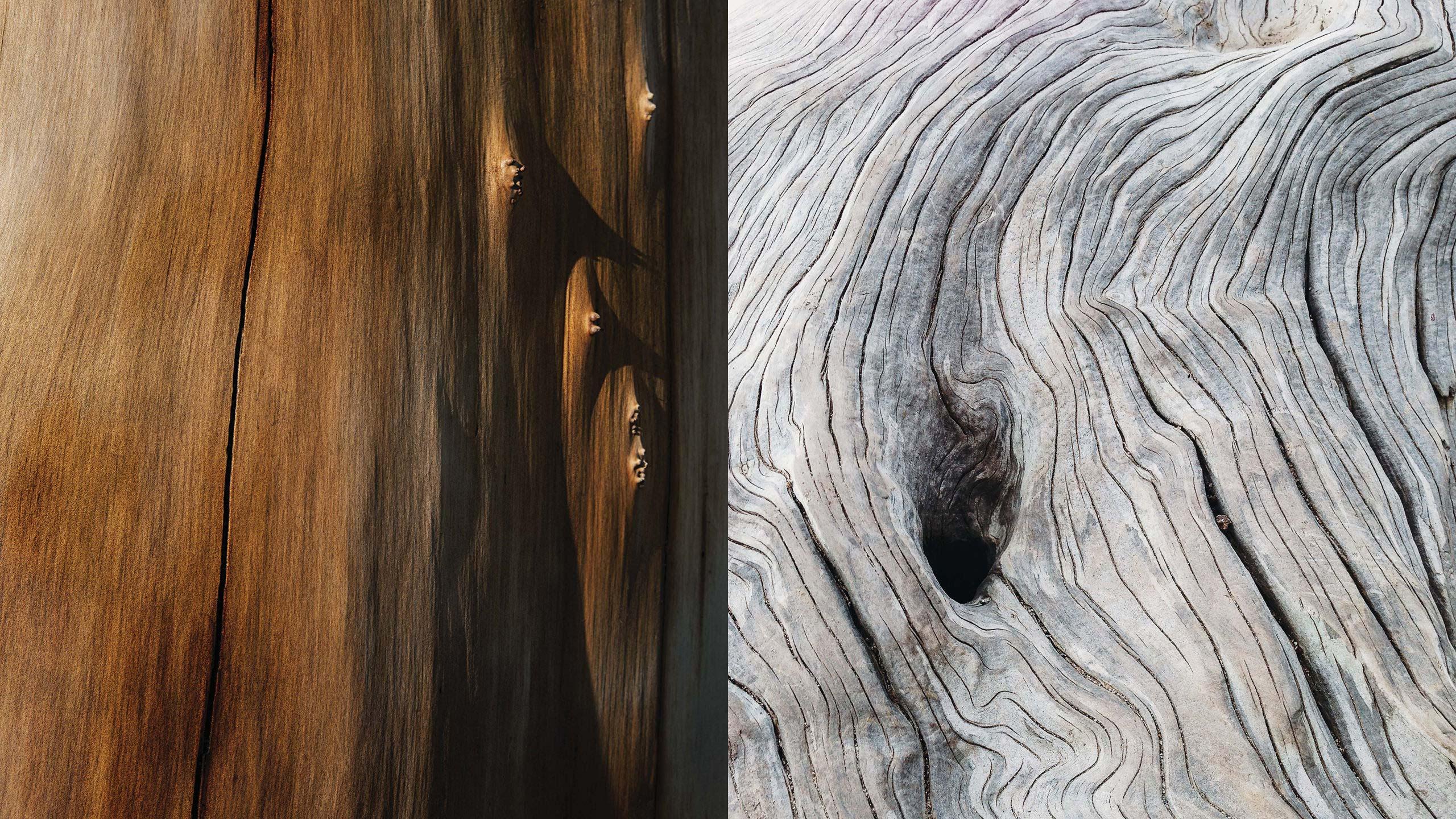 gmund-photography-wood-nature-black-white-14